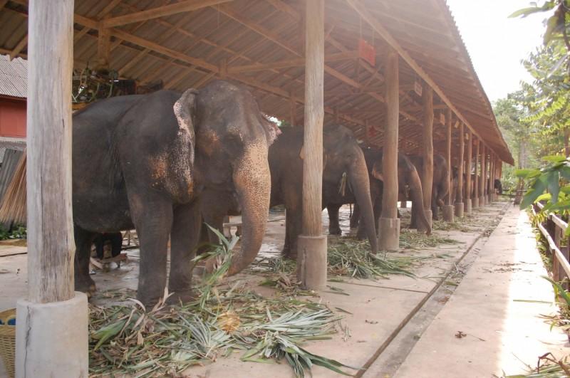 elefanti thailanda