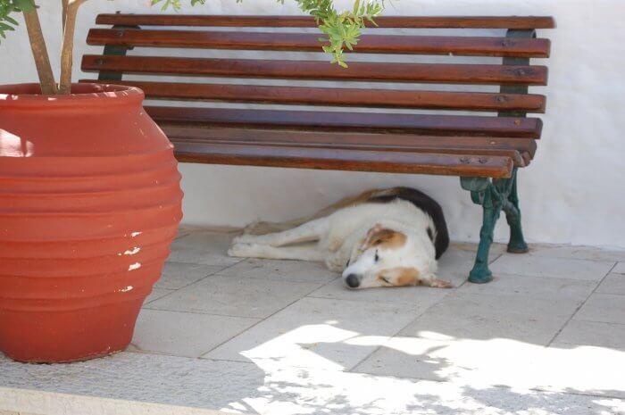câine doarme lefkada