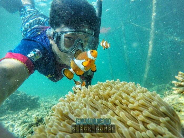 bintan black coral