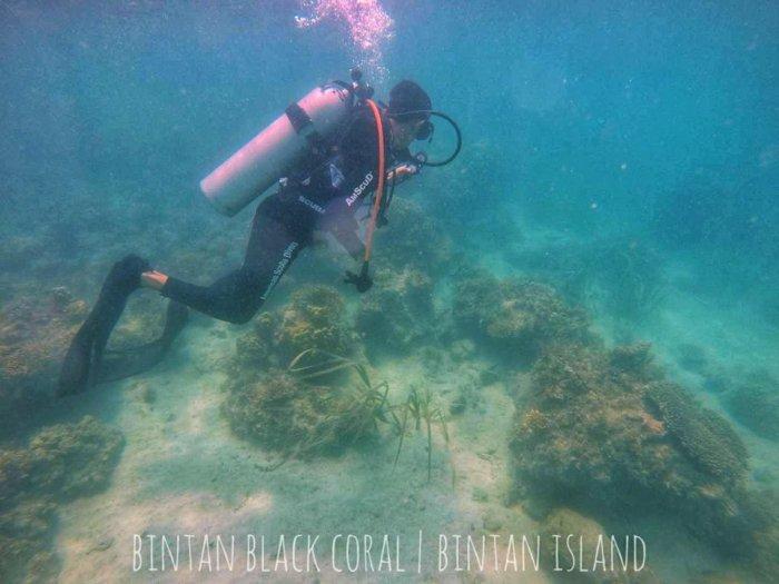 diving indonezia