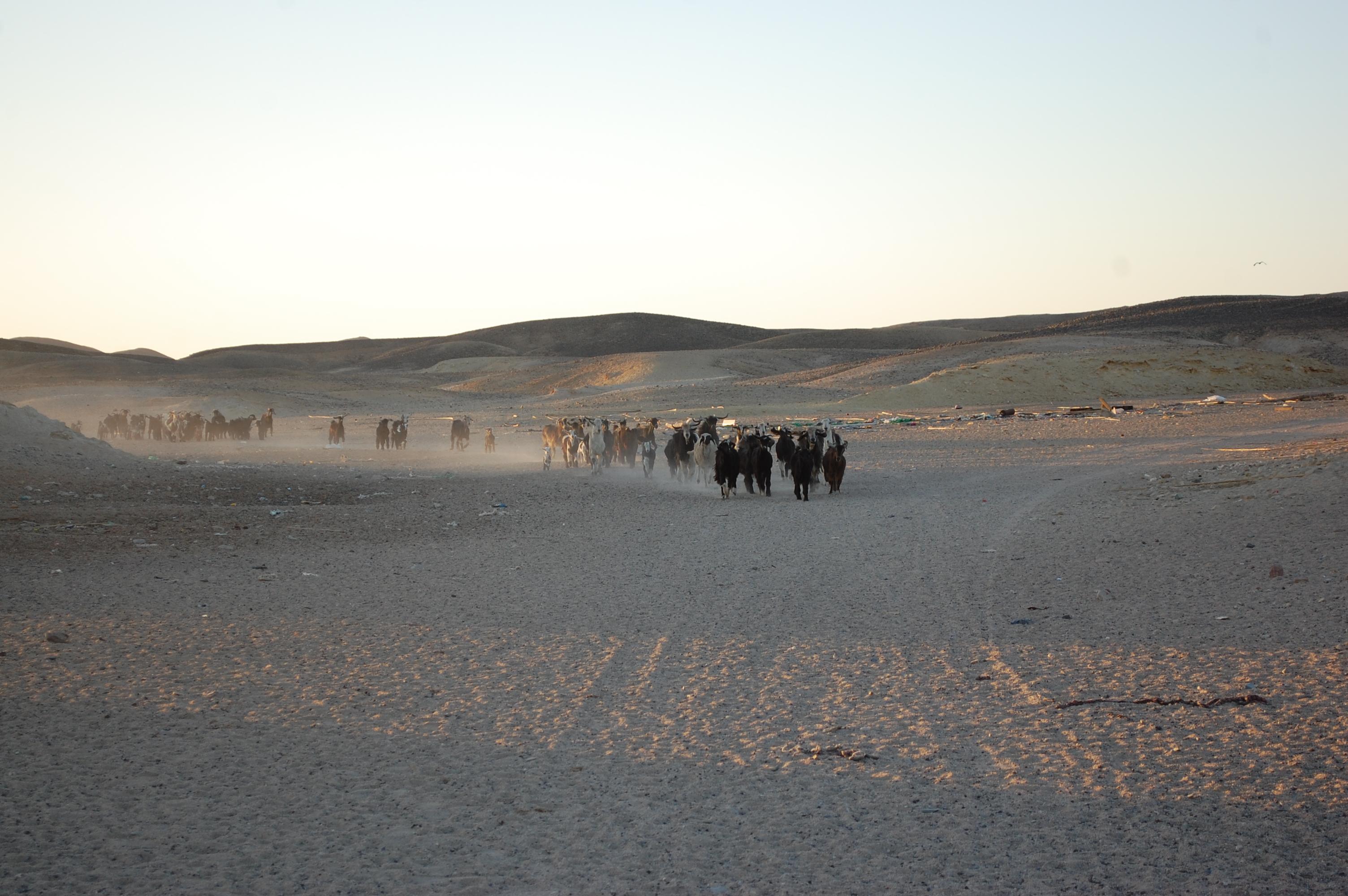 egipt desert