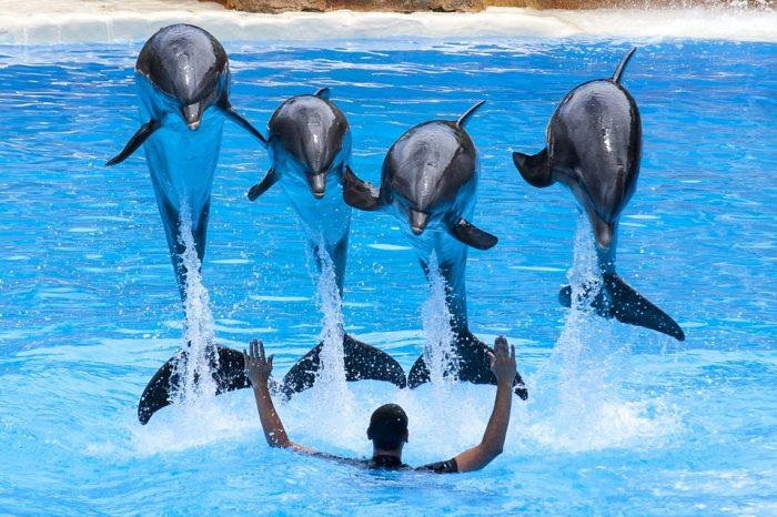 show delfini