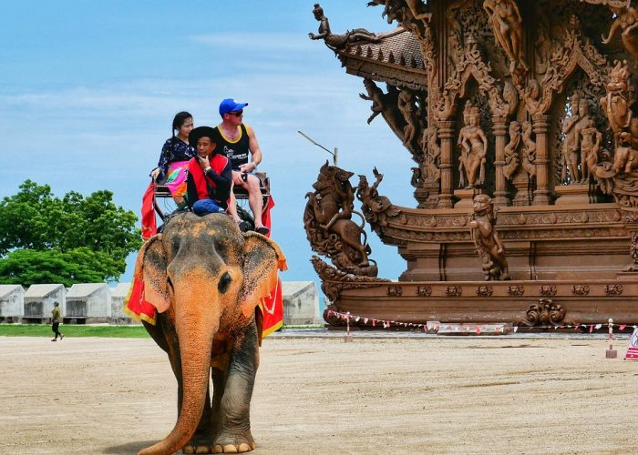 thailanda elefanți
