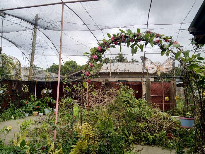 grădină fluturi