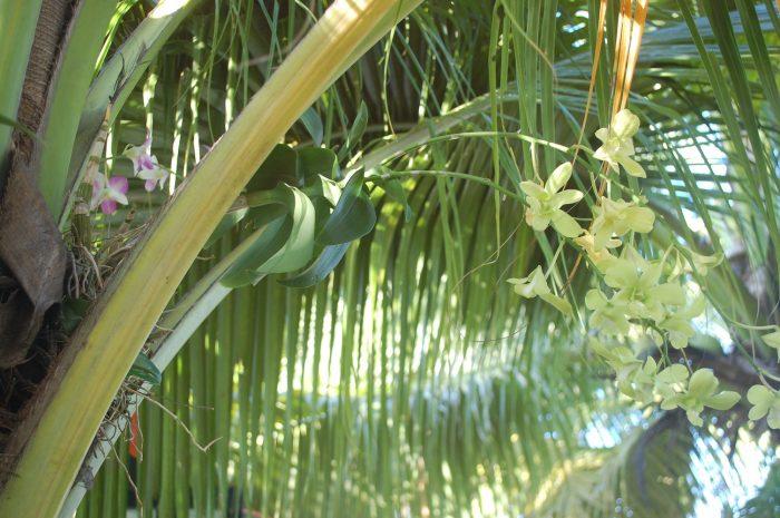 orhidee phuket