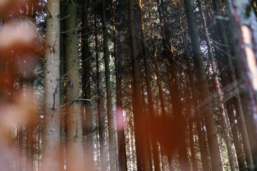 pădure kloten