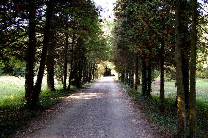 parc dendrologic